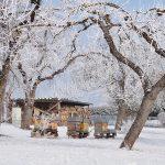 Úle v zime